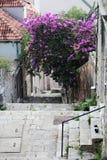 有一个楼梯的一条狭窄的街道在老镇,杜布罗夫尼克 免版税库存照片