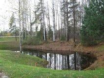 有一个湖的桦树树丛在芬兰 免版税库存图片