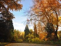 有一个灯笼的利沃夫州公园 免版税库存图片