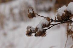有一个特写镜头的干杯子在多雪的冬天背景 免版税库存图片