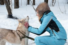 有一个狗爱斯基摩的妇女在冬天在森林 免版税库存图片