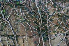 有一个白色词根的一棵植物和在整个表面的绿色叶子风wal 免版税库存图片