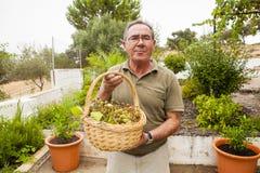 有一个白葡萄篮子的老人在手上 免版税库存照片
