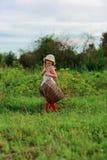 有一个篮子的女孩在庭院里,收获 库存照片