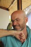 有一个胡子的微笑的秃头人与鹦鹉 免版税图库摄影