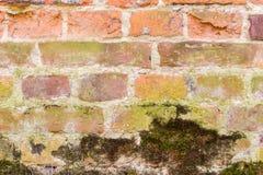 有一些青苔的红砖墙壁 免版税库存照片