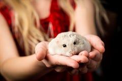 有一只小的矮小的仓鼠的孩子在她的手上 免版税库存图片