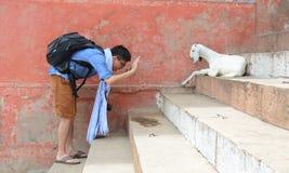 有一只山羊的人在ghat的步在瓦腊纳西 免版税库存照片