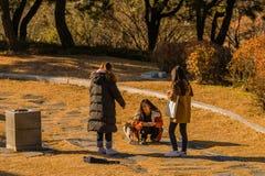 有一只灰色和白色虎斑猫的三名年轻韩国妇女 免版税库存图片