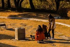 有一只灰色和白色虎斑猫的三名年轻韩国妇女 库存图片