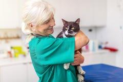 有一只猫的女性兽医在诊所 免版税库存照片