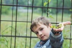有一只蜗牛的孩子在他的手上 免版税库存图片