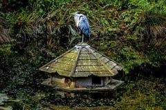 有一只鸟的有趣的看的鸟房子在漂浮在Th的上面 库存照片