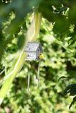 有一只黄色鸟的一个小木灰色嵌套箱在自然本底 美丽的鸟舍在绿色公园 手 免版税库存照片