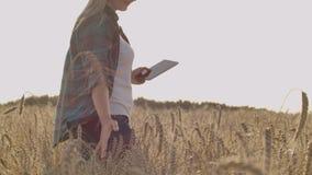 有一台片剂计算机的一个农夫女孩在她的手上审查黑麦的耳朵并且输入数据片剂计算机 股票视频