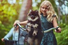 有一头金发的母亲的画象和女儿在自行车乘坐与他们逗人喜爱的小的波美丝毛狗狗在公园 免版税库存照片
