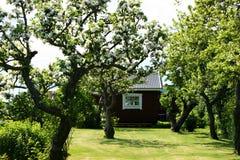 有一小summerhouse和它的树的一个老庭院 免版税库存照片