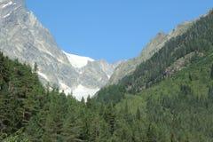 有一座冰山的森林在背景中在乔治亚 免版税库存照片