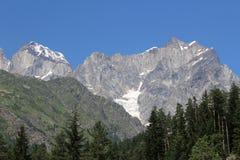 有一座冰山的森林在背景中 库存图片