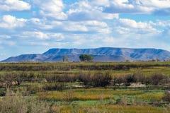 有一座山的矮小的沼泽地在Alamosa全国野生生物保护区的背景中在南科罗拉多 库存图片