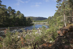 有一座白色桥梁的森林 库存照片