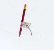 有一支被插入的铅笔的简单的学校金属指南针 库存照片