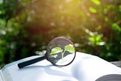 有一本书的放大镜在木在自然背景骗局 免版税库存照片