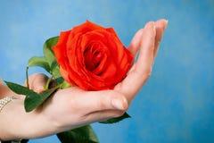 有一朵唯一红色玫瑰的妇女现有量 免版税库存照片