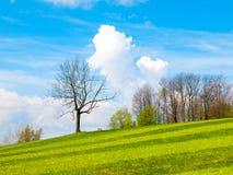 有一朵小树、蓝天和白色云彩的新近地被割的豪华的绿色草甸在一个晴天 一些反弹严格晴朗那里不是的蓝色云彩日由于域重点充分的绿色横向小的移动工厂显示天空是麦子白色风 免版税库存图片