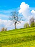 有一朵小树、蓝天和白色云彩的新近地被割的豪华的绿色草甸在一个晴天 一些反弹严格晴朗那里不是的蓝色云彩日由于域重点充分的绿色横向小的移动工厂显示天空是麦子白色风 免版税图库摄影