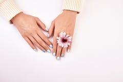 有一朵桃红色菊花的穿着考究的女性手 图库摄影