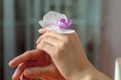 有一朵白色兰花花的妇女的手 图库摄影