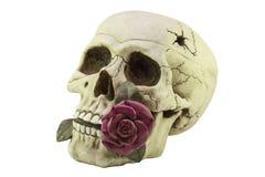 有一朵紫色玫瑰的头骨在您的牙 库存照片