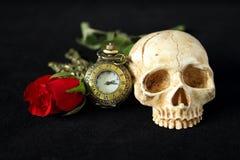 有一朵红色玫瑰的一块邪恶的人的头骨在背景中和在黑背景 库存照片