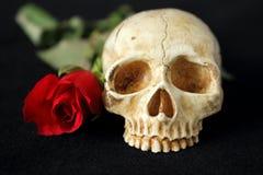 有一朵红色玫瑰的一块邪恶的人的头骨在背景中和在黑背景 免版税库存照片