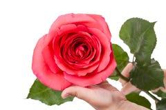 有一朵红色玫瑰的孩子 免版税库存图片
