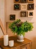 有一朵绿色花的罐 免版税库存照片