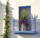 有一朵花的蓝色阳台在有常春藤的一个白色房子里 免版税库存图片