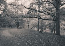 有一条偏僻的长凳和空的路的秋天公园 免版税库存照片
