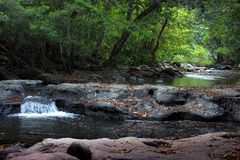 有一条动作缓慢小河的森林 库存照片