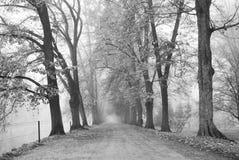 有一条宽广的步行道路的森林公园在黑白 免版税库存照片