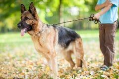 有一条德国牧羊犬狗的孩子在公园 免版税库存图片