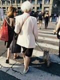 有一条狗横穿步行街道的年长妇女在行人穿越道 库存图片