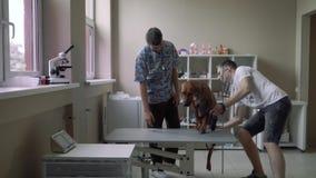 有一条狗的人在一个兽医诊所的一条皮带 影视素材
