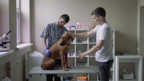 有一条狗的人在一个兽医诊所 影视素材