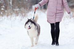 有一条狗的女孩在步行在森林里,多壳 免版税库存图片