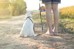 有一条狗的愉快的女孩在花的领域 免版税库存照片