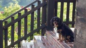 有一条狗的老木房子在门廊 免版税库存照片