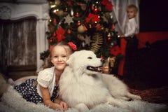有一条白色狗的女孩在圣诞树附近 库存图片