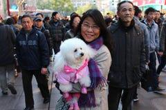 有一条逗人喜爱的长卷毛狗的端庄的妇女在主要购物街道上在上海 库存图片
